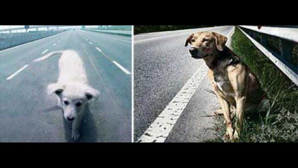 Moto - News: Danni da cane randagio: Comune responsabile