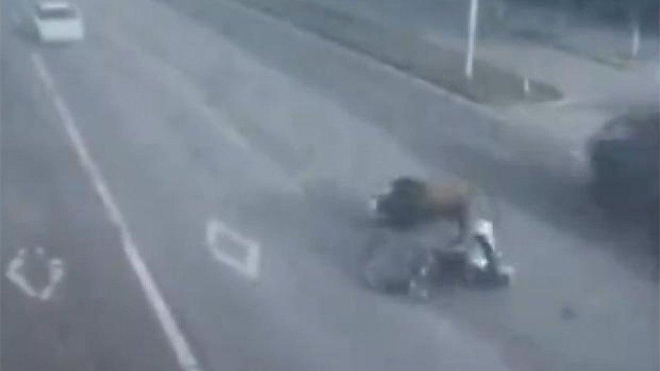 Moto - News: Incidente moto contro toro in Cina: la polizia spara [VIDEO]