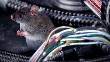 Auto - News: Toyota: sotto accusa a causa dei topi che rosicchiano i cavi dell'auto